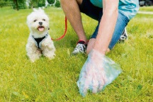 Dog owners are responsible for cleaning up after their pet in a public area.