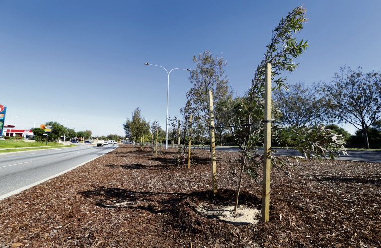 The City of Wanneroo has been using mulch for streetscapes to reduce the amount of water needed for irrigation. Picture: Martin Kennealey.