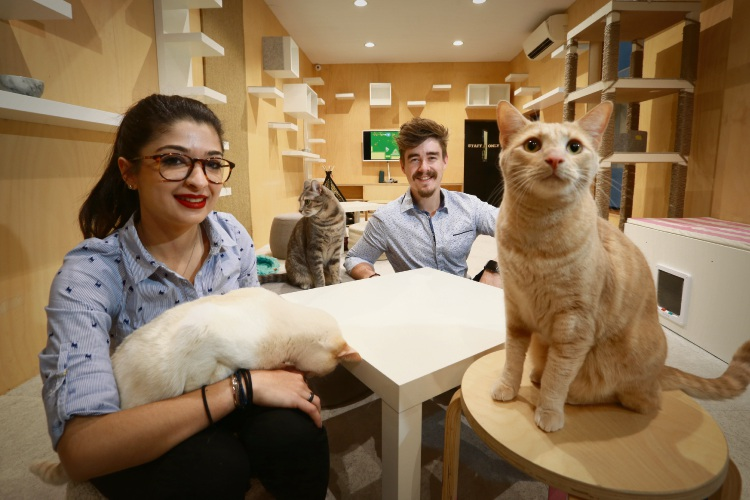 Terps '' Pepi'' Platritis and Chris Mewburn (co founders) with cats. The Cat Cafe is celebrating two years of business, and they've just announced they're also becoming a satellite foster centre for the Cat Haven. Picture: Andrew Ritchie www.communitypix.com.au   d484826