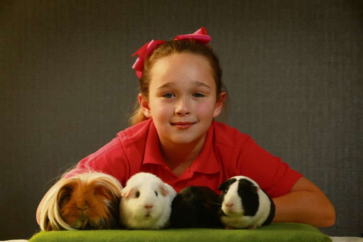 Emily Long (9), with her guinea pigs or cavies, is bringing her favourite ones to compete in the National Cavy Show in August 2018. Picture: Andrew Ritchie www.communitypix.com.au d484706