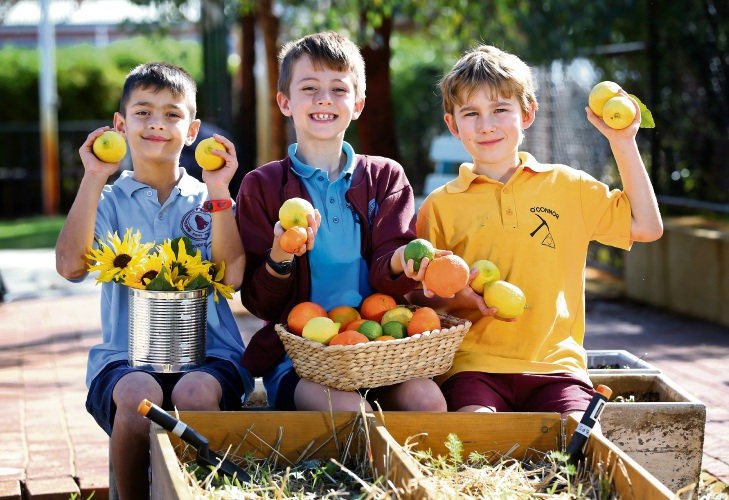 Year 3 students Jack Mance (8), Benji Jones (8) and James Juniper (8). The Bayswater Primary School P and C Gardening Committee has developed a community grow cart where students can share excess produce with the community. Picture: David Baylis.