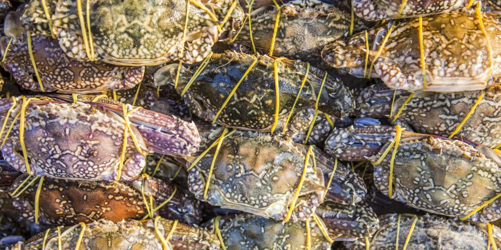 A husband and wife have been fined for taking undersized crabs from Point Walter.