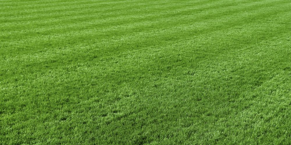 City of Rockingham clarifies artificial turf policy