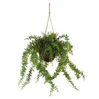 Baker fern from Freedom.