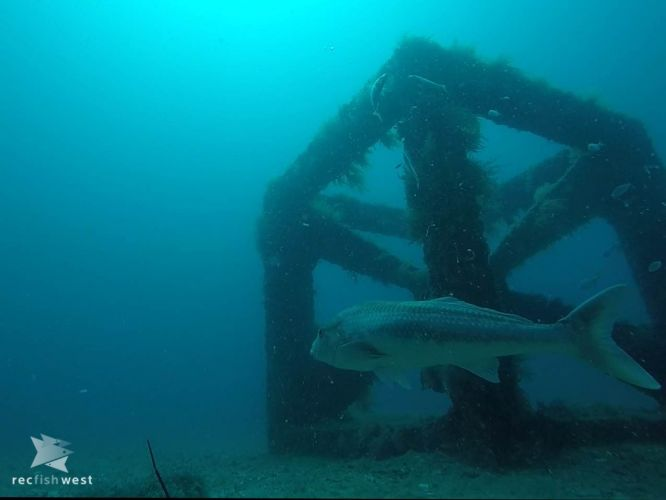 A reef module from the Dunsborough Artificial Reef. Picture: Recfishwest