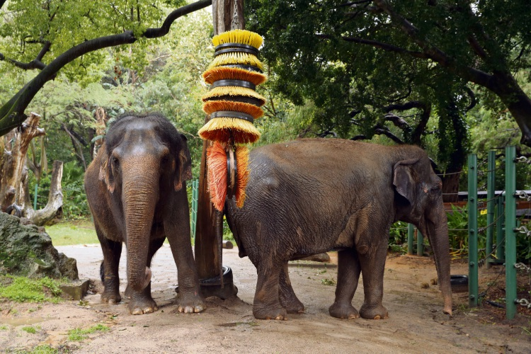 Permai and Tricia with elephant keeper Steve Edmunds. Picture: Martin Kennealey
