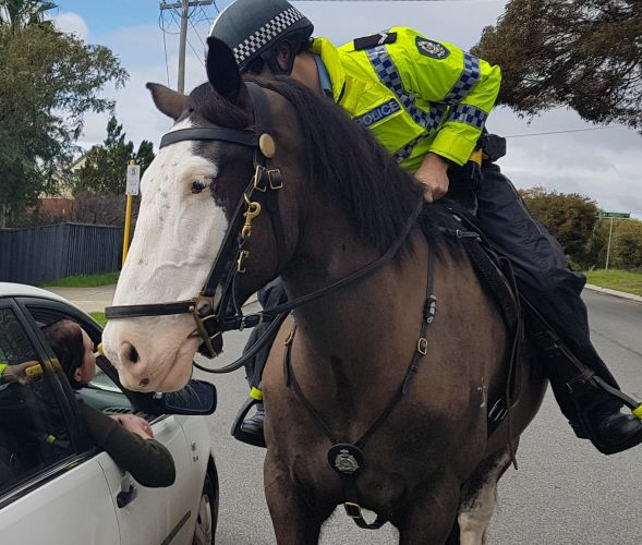 Woman fined for assaulting police horse in Northbridge.