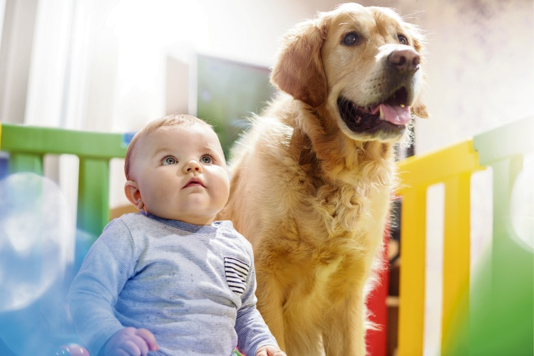 Preparing the family dog for a newborn.