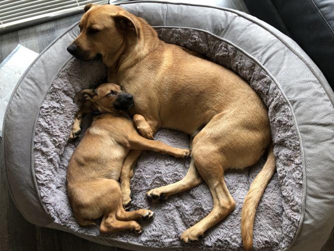 Frankie and foster puppy Dinkie in quiet repose.