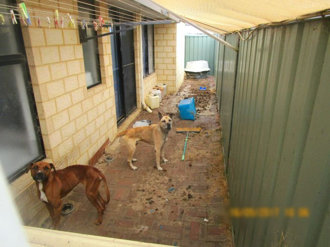 Max and Marley were found in a small enclosed area, with no visible food.