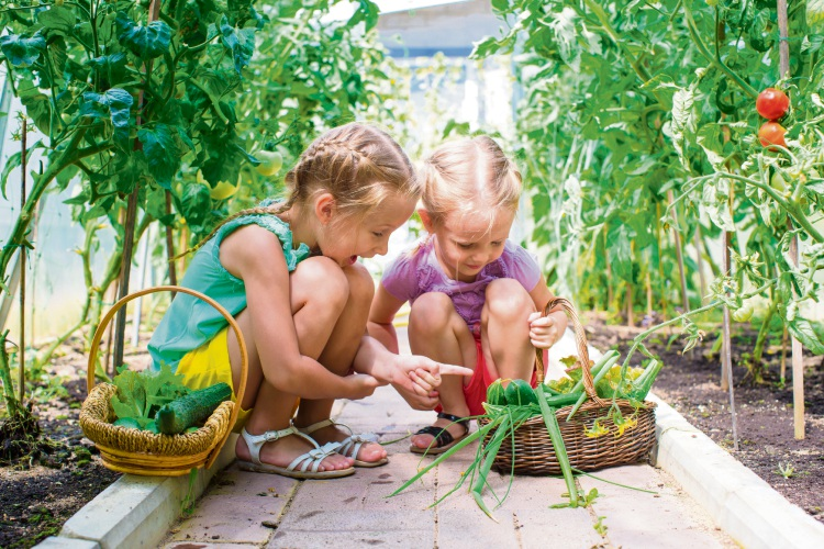 Yates is searching for Australia's next top junior gardener.