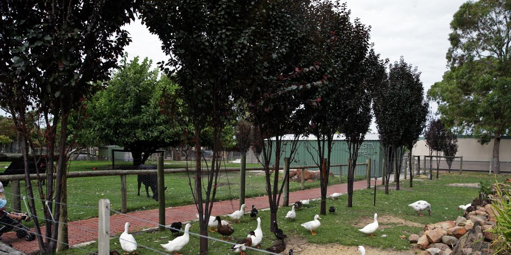 A visit to Landsdale Farm School is planned in the City of Wanneroo's spring school holidays program.  (File picture)