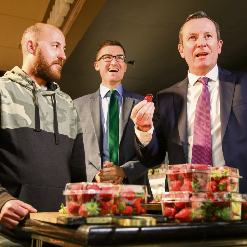 Premier Mark McGowan sampling WA strawberries.