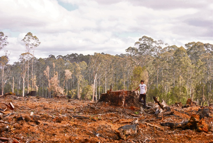 WA Forest Alliance convenor Jess Beckerling will speak at a World Habitat Day event in Clarkson.