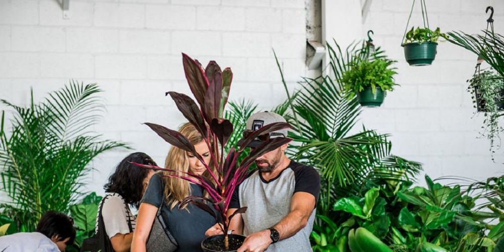 Excellent The Jungle Collectives Hip Indoor Plant Sale Party At The Home Remodeling Inspirations Basidirectenergyitoicom