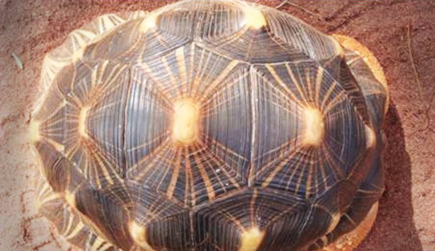 The stolen tortoise has been returned to Perth Zoo seven years after it went missing.