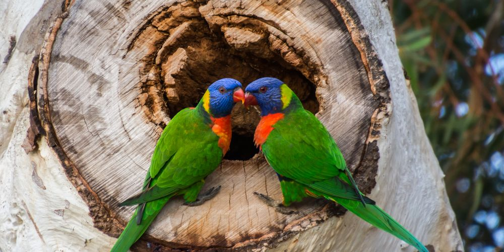 Denise Williams got up close and personal with nature, capturing two colourful lorikeets at Gibson Park in Fremantle.
