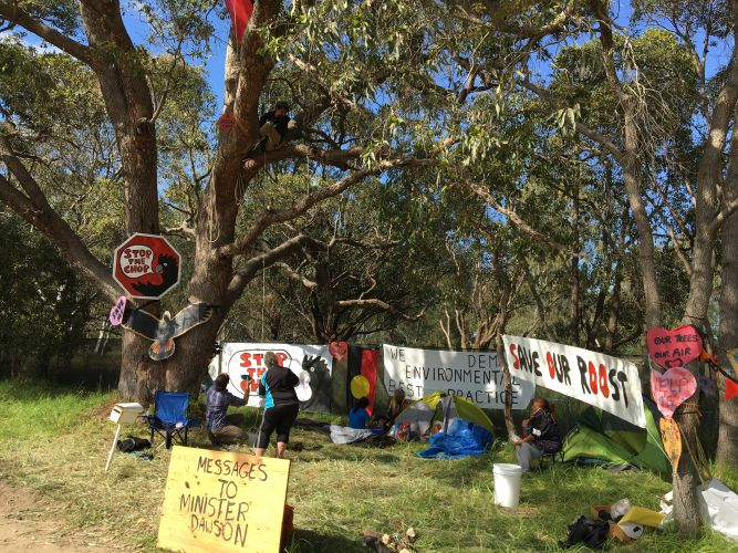 Save the Great Brixton Wetlands protesters underneath the tree where Neville Kirk is sleeping. Picture: Ben Smith.
