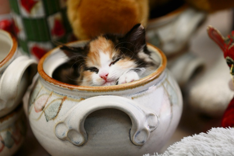 Shenton Park's Cat Haven will hold a Monster Garage Sale to raise funds for cats
