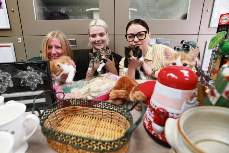 Chandra Woodley, Meg Llandwarne and Lauren Nesbitt with Cat Haven kittens. Pictures: Andrew Ritchie