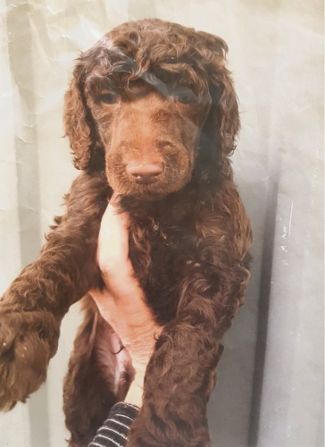 Plea For Return Of Waikiki Primary School Therapy Puppy Stolen
