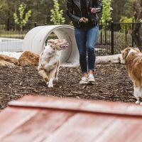Bushmead Dog Park.