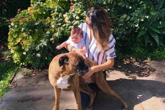 Family dog dies and baby sustains serious injuries after Dwellingup tent tragedy