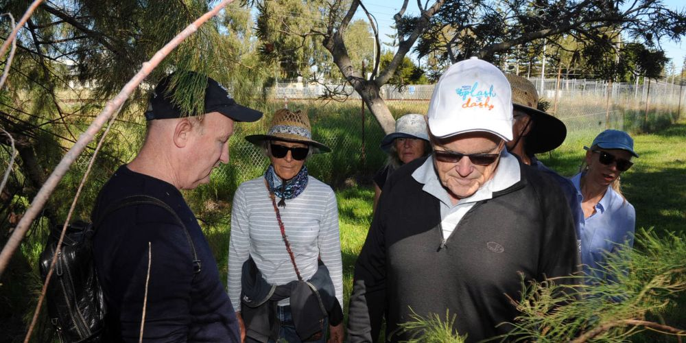 Arborist Steven Kneebone (left) showed Mayor Phil Angers the introduced trees.