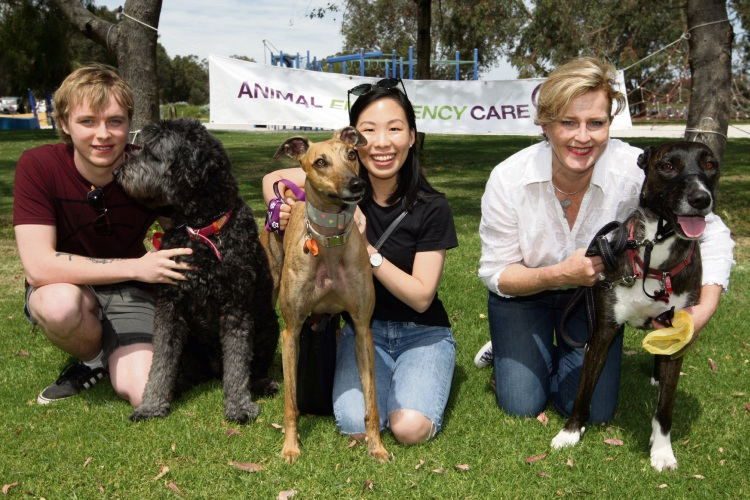 Callum Daniels and 'Pepper', Poh Teng & 'Sophie' , Kylie Warnock and ' Felice'. Photo: Bruce Hunt