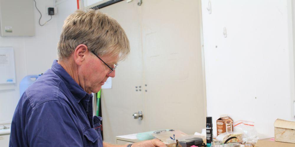 Principal research scientist Tony Friend fitting a radio collar on a numbat. Picture: Nadia Budihardjo