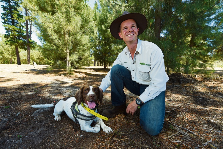 Terrestial Ecosystems owner and dog handler Scott Thompson with conservation detection dog Dazzy. Picture: Jon Hewson.