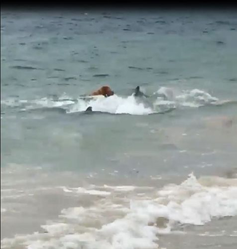 Oakley swimming with the dolphins yesterday.
