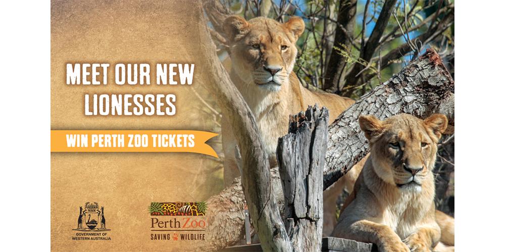 Website_Zoo