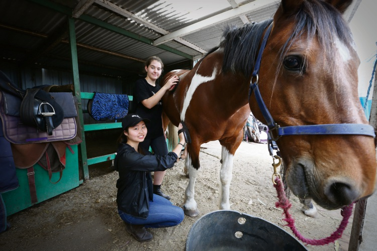 Year 10 MLC students Paige Taggart and Charlize Chen have been volunteering at Claremont Therapeutic Riding Centre. Andrew Ritchie www.communitypix.com.au   d488830a
