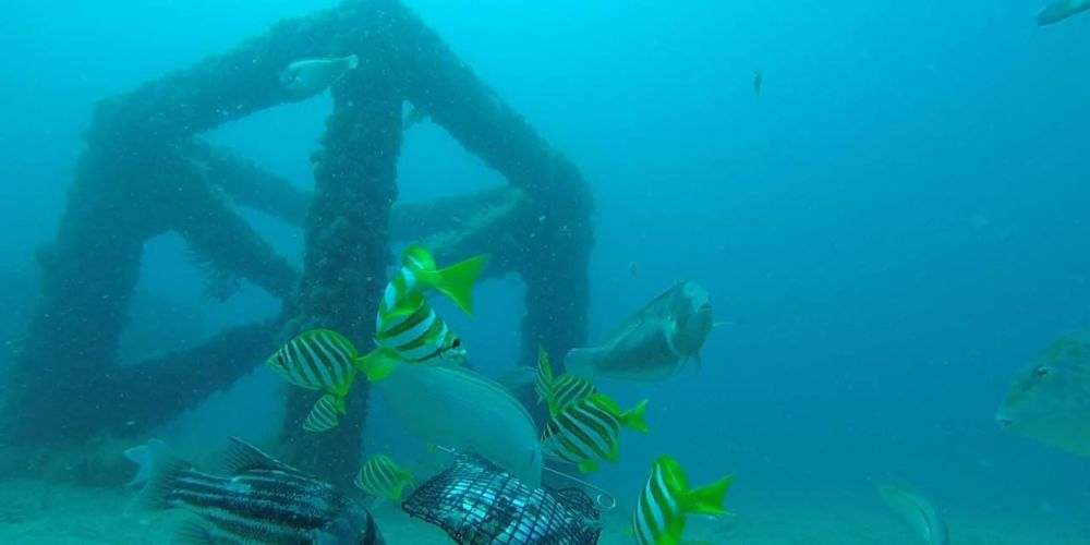 Call for recreational fishers to help scientists monitor artificial reefs