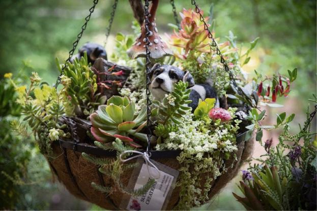 Succulent Creations.