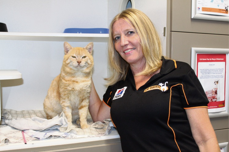 "Cat Haven Marketing Manager Chandra Woodley with domestic short hair ""Pearce"", who has Feline Immunodeficiency Virus (FIV)."