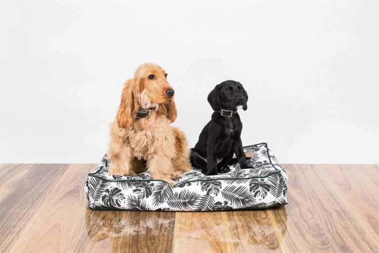 Perth: Christmas pet gift ideas to keep your furry friends happy