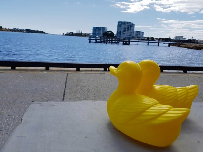 Clubs urged to register interest for Mandurah Duck Race