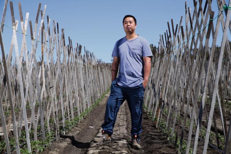 Landsdale Strawberry Farm manager Anthony Lieu. Photo: Martin Kennealey