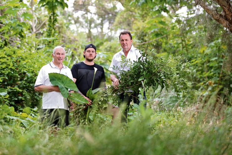L-R: David Dyke of Maylands (Coordinator, Bardon Park Friends Group) with the Coordinators of the Berringa Park Friends Group, Hayden Carter and Greg Pound, seen here with some of the invasive weeds found at Berringa Park. Photo: David Baylis