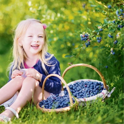 Growing blueberries at home.