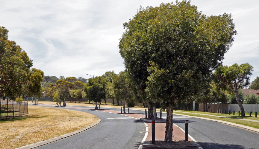 Street trees in Wanneroo. Picture: Martin Kennealey d489224
