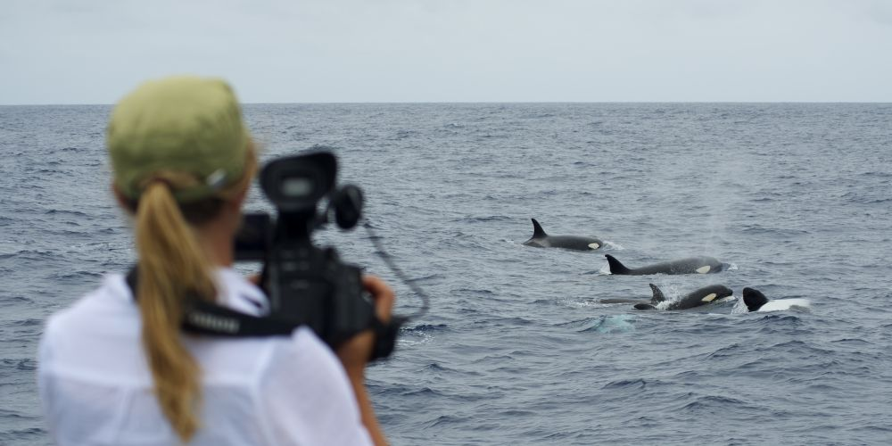 Jennene Riggs filming for the 2013 documentary The Search for the Oceans Super Predator.