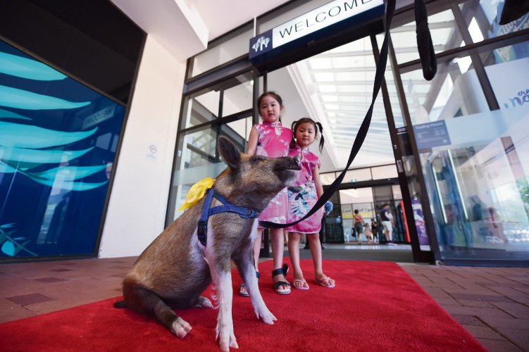 Bongo the pig with Shenton Park sisters Angela, 6, and Mia Zhang, 4, at Garden City Shopping Centre. Picture: Jon Hewson