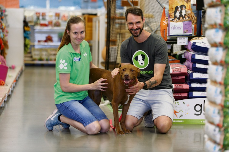 PETstock Balcatta store manager Zina Lulic and John Bishop with Cocoa ahead of National Pet Adoption Day on Saturday, February 9 Picture: Andrew Ritchie www.communitypix.com.au