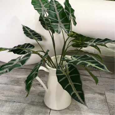 Top Rare Indoor Plants For Perth Collectors In 2019 And Where To