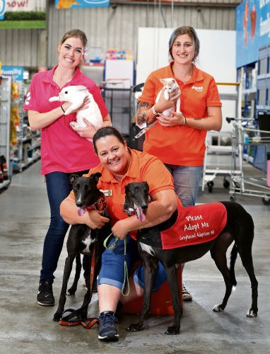 (L-R) PETstock staff, Lyndsie Delarue with Flake the rabbit and Kate O'Connell with Staci the kitten. FRONT: PETstock Belmont assistant manager Sandra Jones with Greyhounds Shadow and Telin. Picture: David Baylis