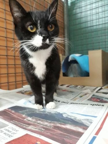 Home at last: Sam was healthy enough to be returned to her owners when found on Friday