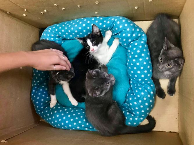 Kittens dumped at Cat Haven on 30-degree day